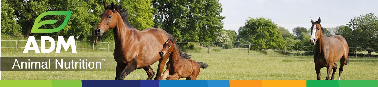 Feeding Your Equine Friend