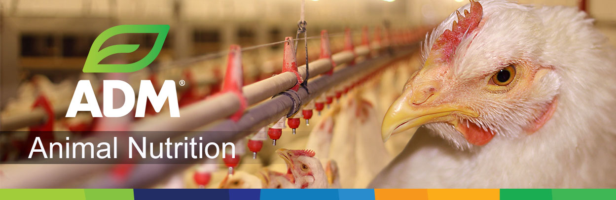 1SpecialtyIngr-Main-Landing-Banner-Poultry