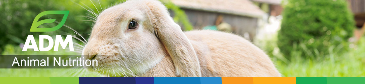 Rabbit-Subpage-Medium-Banner6