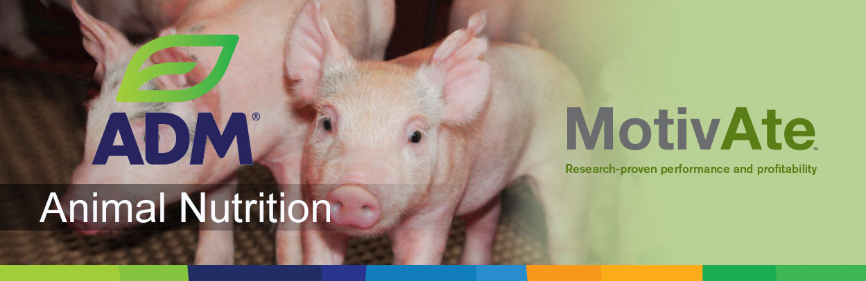 Swine-Main-Landing-Banner-Motivate-3