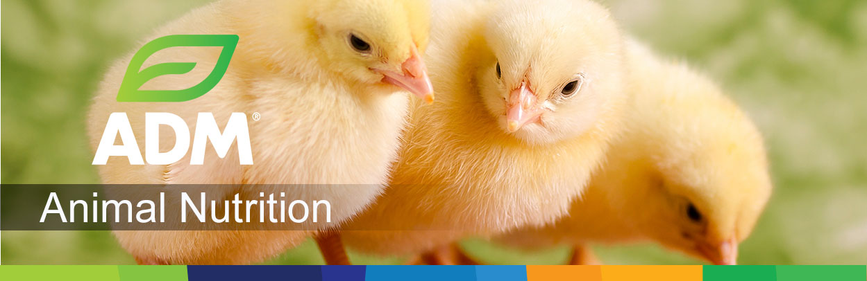 Poultry-Main-Landing-Banner2