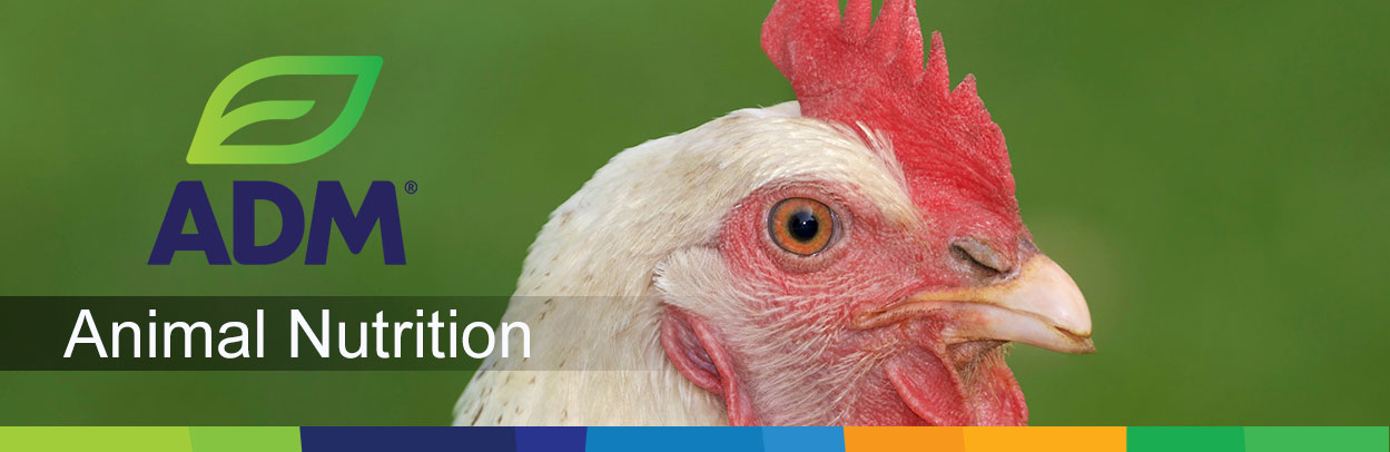 Poultry-Main-Landing-Banner4