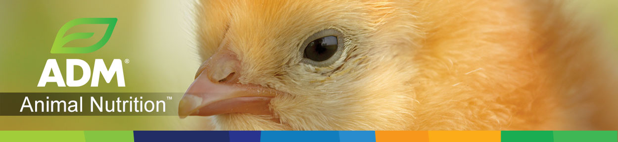 Poultry-Subpage-Medium-Banner3