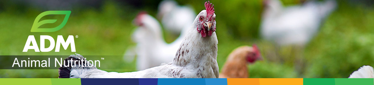 Poultry-Subpage-Medium-Banner10