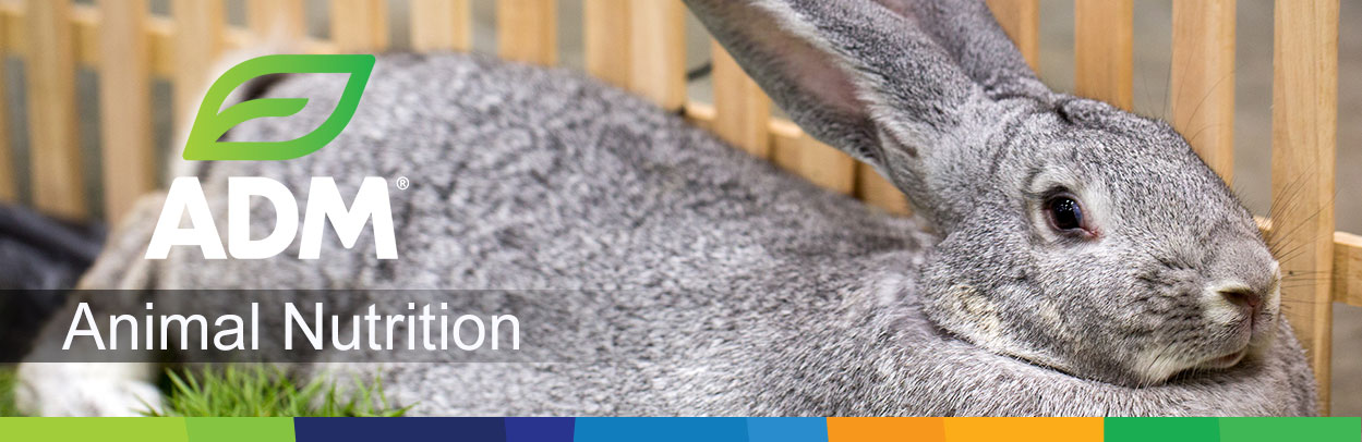 Rabbit-Main-Landing-Banner3